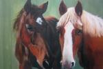 paarden_front1